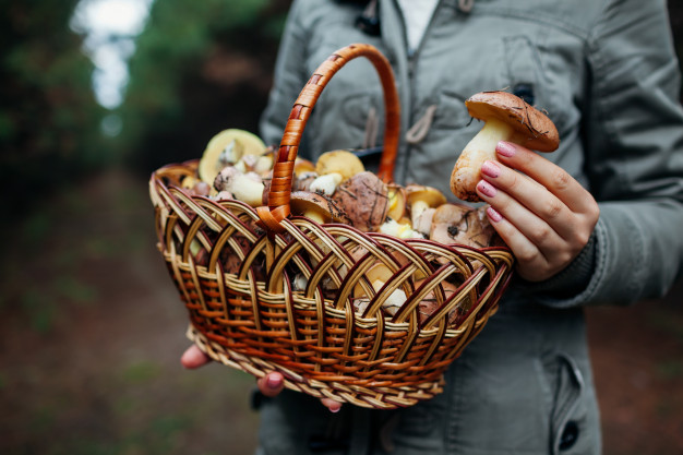 8 Rules of Responsible Mushroom Picking. These Are the Principles of the Forest Savoir-Vivre