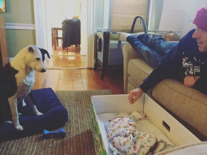 Mothers in Finland Use Cardboard Boxes for Newborns. Here Are Their Reasons For Doing So