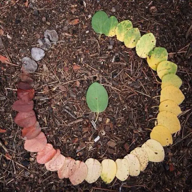 11 Fascinating Photos Capturing the Magical Cycle of Life