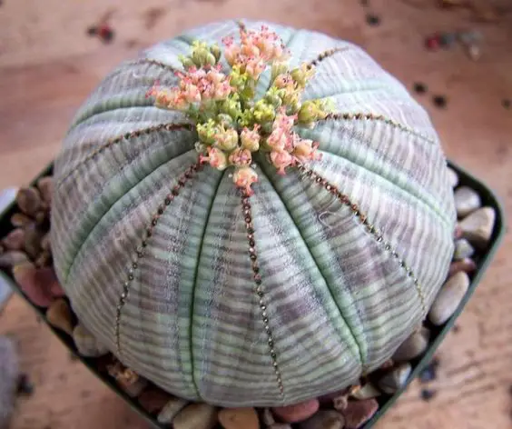 19 Weird Succulents That Look like They're from Sci-Fi Movies. They're Real!