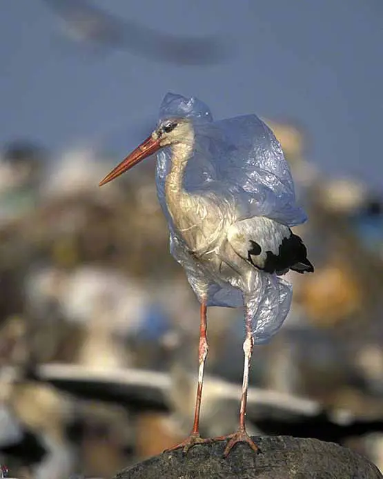 Which Way You Liked the14 Evidence of How Animals Suffer From Every Plastic Thrown Away…