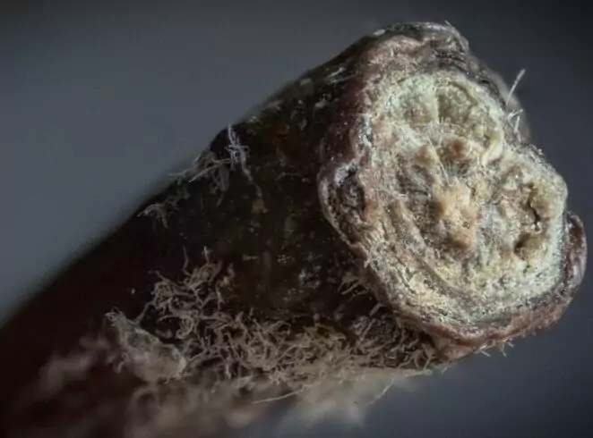 20 Microscopic Images of Common Object. You'll Never Look At These Things the Same Again