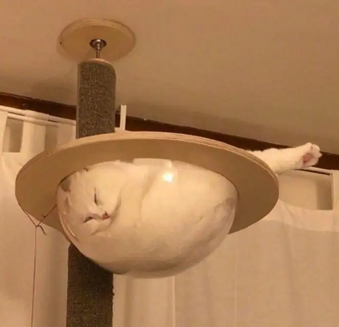 25 Peculiar Places That Have Become a Cat's Bedroom. The Logic of These Furries No One Will Understand