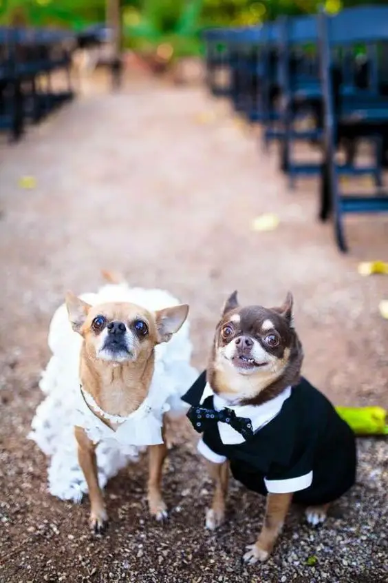 10 Wedding Cakes With Newlyweds' Pets. Young Couples Sneak Their Favorite Dogs Into Cake Decor