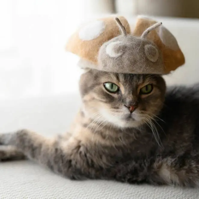 Twenty-Three Cat Hats Made from the Cats' Own Fur. An Idea like No Other!
