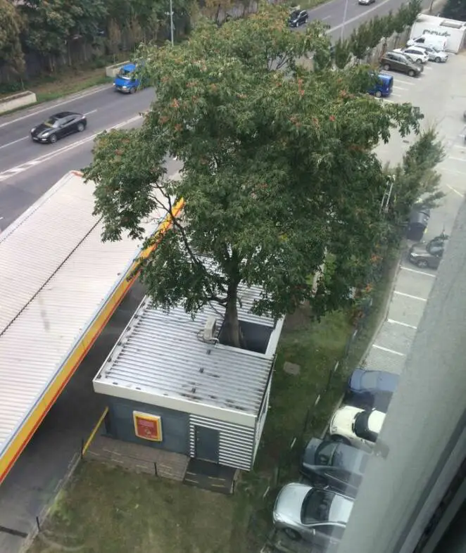 15 Photos Showing Places Where Trees Have Been Allowed to Adapt to City Life