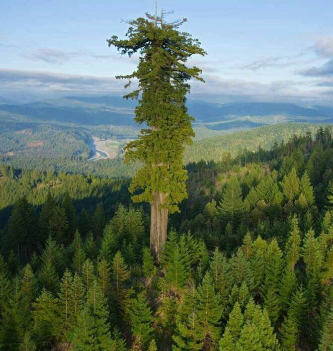 16 Unique Trees That Look Like Something Else From Another Dimension