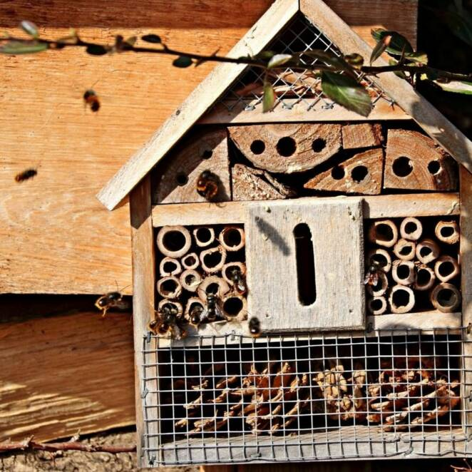 Bug Boxes Help Significant Visitors to Get Through The Hard Winter, Your Backyard is Vital to Keep The Ecosystem Working!