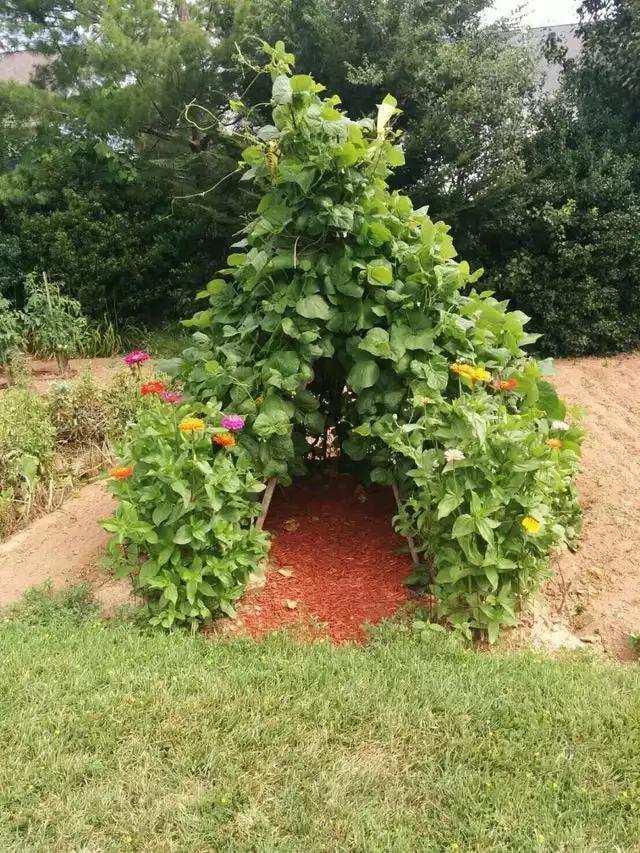 17 Garden Hacks Which Make Every Gardener's Job Easier