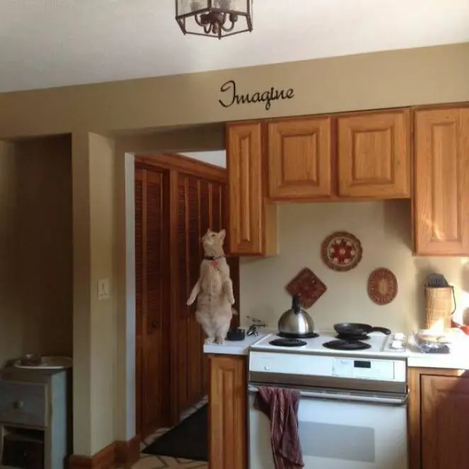 23 Cats Whose Behavior Defies the Laws of Logic