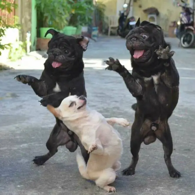 20 Adorable Dogs That Will Make Your Day More Delightful