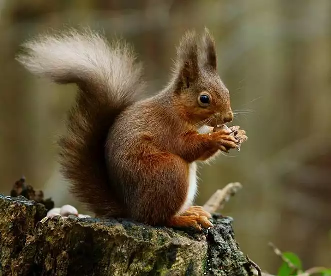 21 Surprising Animal Facts. A Fascinating Insight into the Lives of Various Species