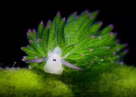 17 Photos Showing True Wonders of Nature. Only a Few People Have Seen These Animals and Plants
