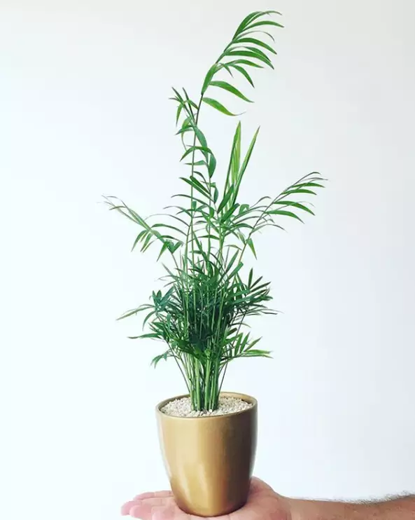 Air-Purifying Plants – 10 Potted Plants for Home Use