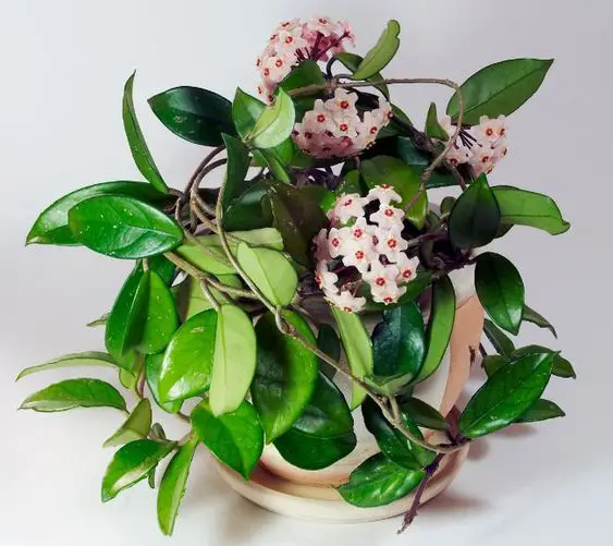 7 Intensively Smelling Potted Plants That Will Successfully Replace The Air Freshener