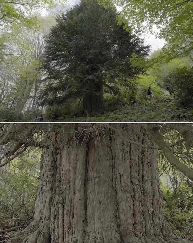 The 10 Oldest Trees in the World That Are Still Alive