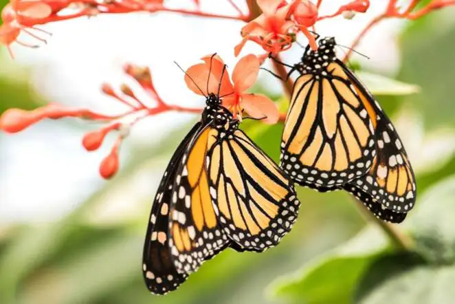 10 Tricks to Make Your Garden Nature Friendlier with the Creatures That Live in It