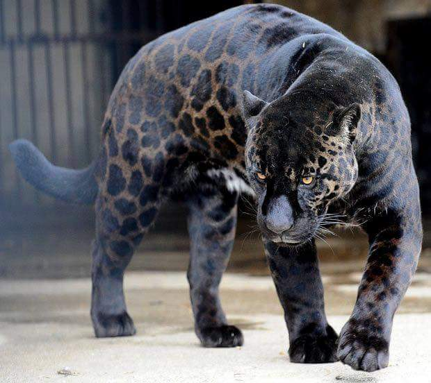 17 Unusual Animals That Will Enchant Every Observer With Their Original Appearance