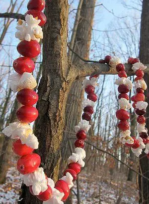 The Christmas Bird Garland Will Successfully Replace the Traditional Bird Feeder. It Looks Phenomenal