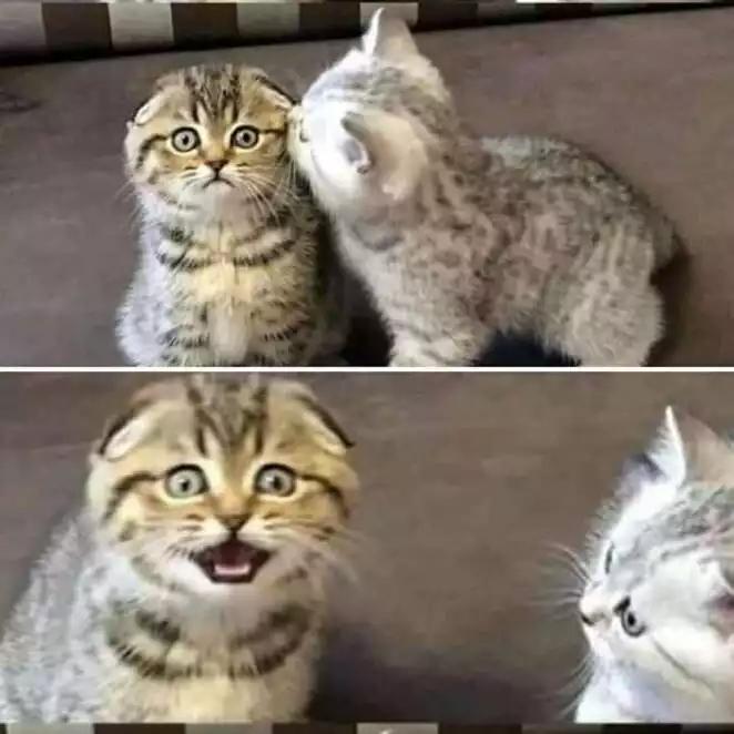 24 Funny Cat Photos Transformed into Cartoons