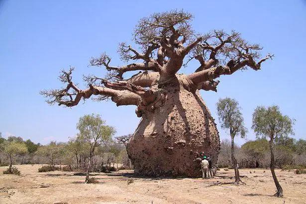 20 Trees That Can Survive Anything. Their Will to Live is Impressive