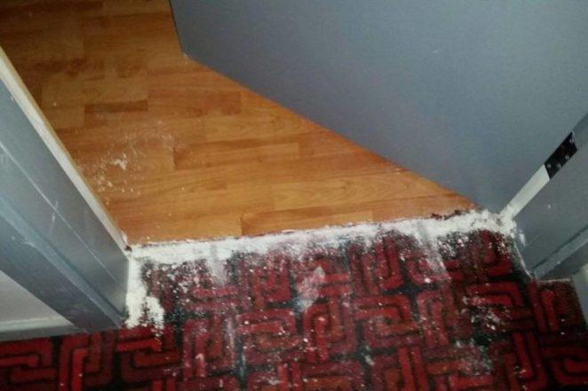 Bedbug carpet ground