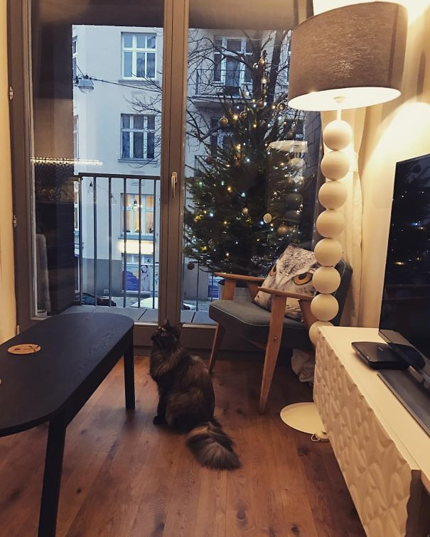 Christmas tree balcony cat