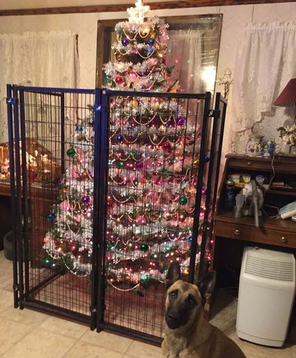 Christmas tree dog 2