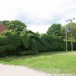 Dragon-Hedge-fi