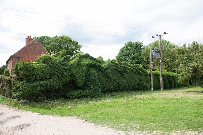 Dragon-Hedge-foto