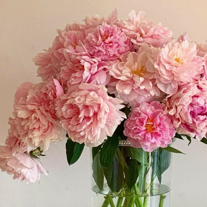 12 Surprising Facts about Peonies. Anyone Loving These Flowers Should Definitely Know Them!