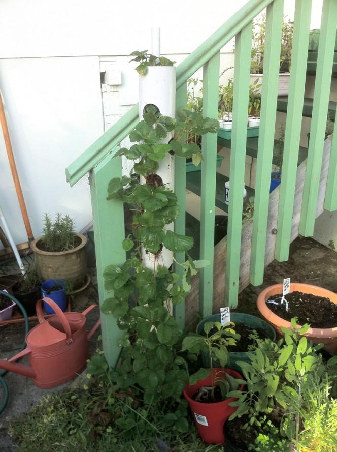Vertical-Strawberry-Tube-Planter-04