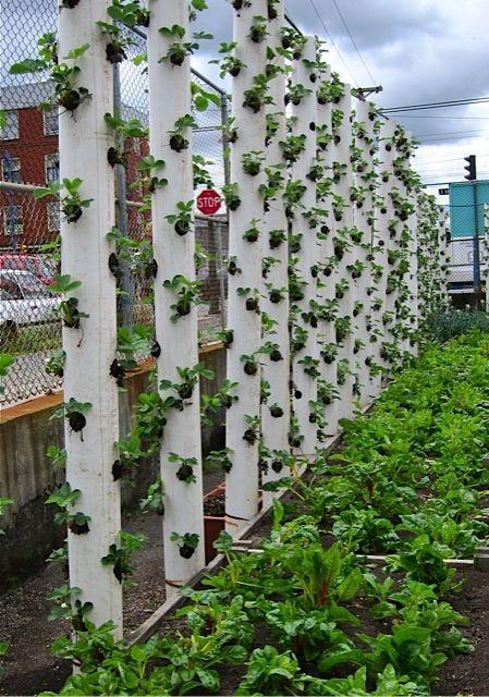 Vertical-Strawberry-Tube-Planter-05