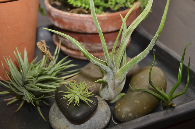 6 Hard-To-Kill Fun & Easy Plants to Grow at Your Home! + How to care for them