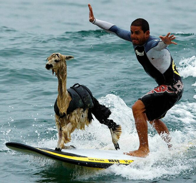 16 Unbelievable Phots Proving That Everything Is Possible in the Kingdom of Animals