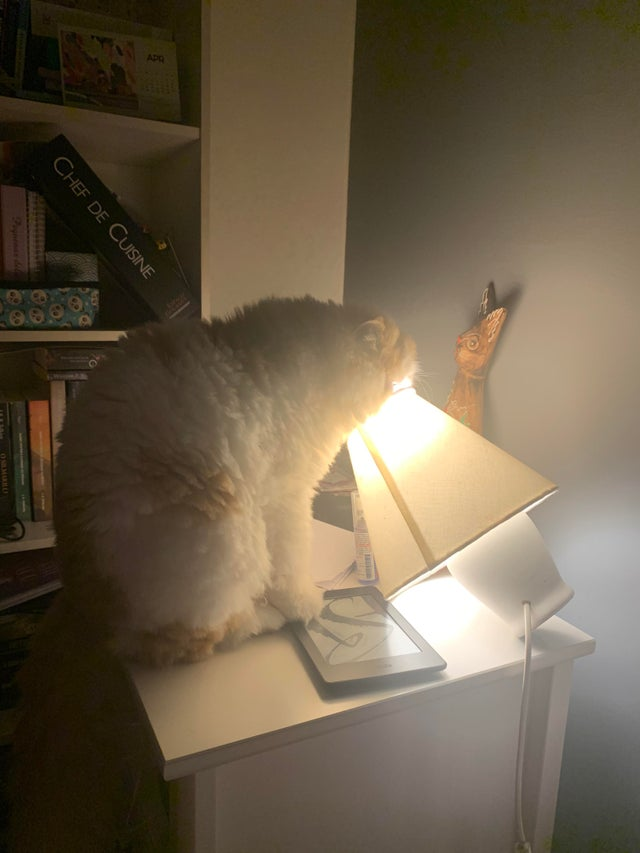 20 Photos Revealing the Secret Life of Our Pets. Cats and Dogs Do Have Their Secrets!