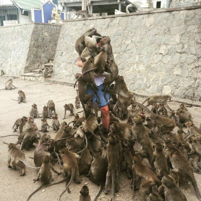 15 Photos Taken All over the World Showing How Smart Animals Can Get to Make You Feed Them…