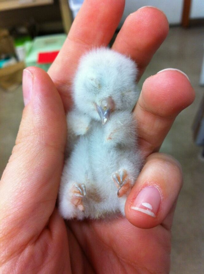 27 Baby Animals That Can Break Even the Hardest Hearts