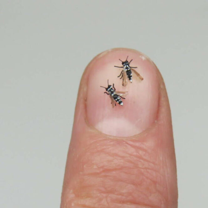 24 Miniature Animal Figurines. They Look So Realistic! the Tiniest Toys in the World