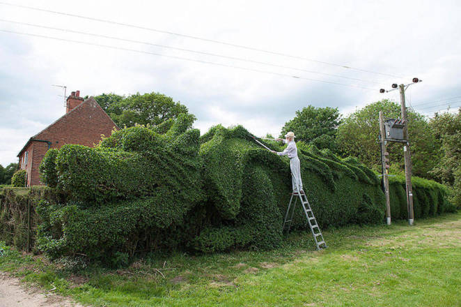 Old Man Spent 13 Years Turning His 150-Foot-Long Hedge Into A Dragon