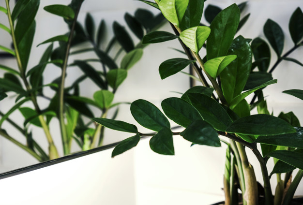 Plants Perfect for Bedrooms. Soothing for Respiratory System, Removing CO2 and Helping You Fall Asleep