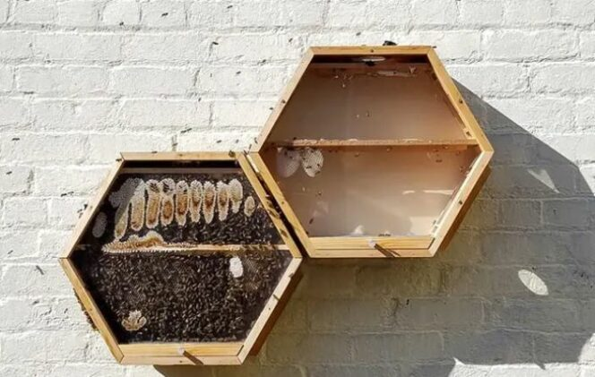 Beecosystem Is a Modular Hive. Thanks to the System You Can Keep Bees in Your… Living Room!