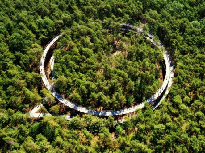 Amazing Cycling Track among Trees! 9 Photos Showing a Path Where Cycling Is Nothing but Pleasure!
