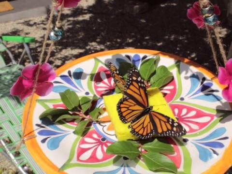 butterflies-feeder-01