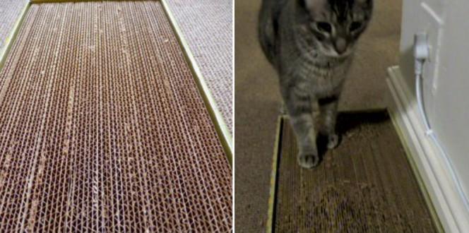 cardboard cat scratcher fb
