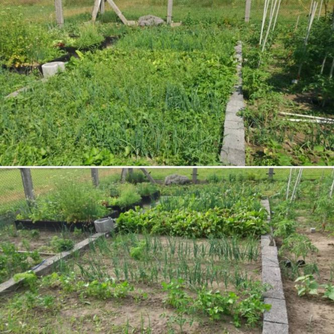 Recipe for Natural Herbicide. Beautiful and Eco-friendly Lawn