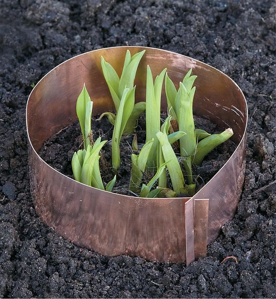 Copper Tape Will Protect Your Plants from Snails