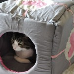 cosy-sponge-cat-cube-fi
