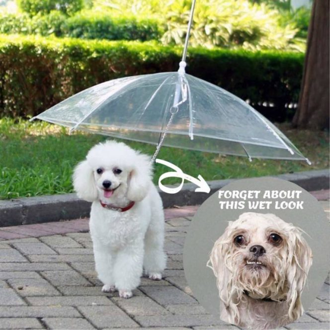 19 Products for Cats and Dogs Solving So Many Problems