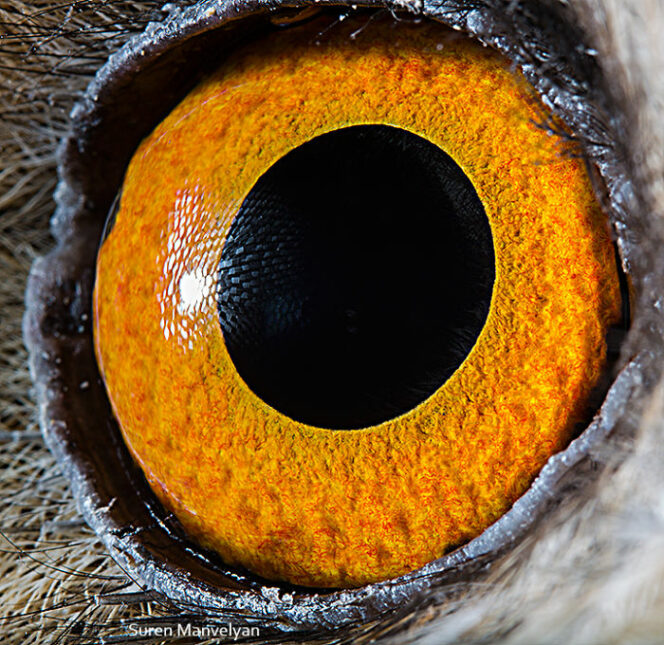 Eyes Out of This World. 23 Photographs Showing Magical Universe in the Look of an Animal